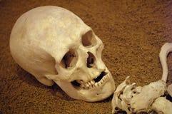 forntida mänskligt skelett Arkivfoto