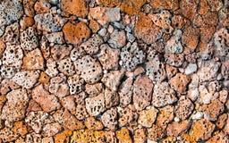 Forntida murverk av skaldjur Arkivbild