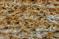 Forntida murverk av skaldjur Royaltyfria Bilder