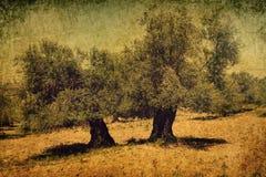 forntida olive tree Bibel och landskap för minne för heligt land historiskt Tappning utformar fotoet royaltyfria bilder