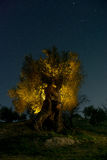 Forntida olivträd på natten Arkivfoto