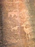 Forntida petroglyphs i den Zion nationalparken Arkivfoton