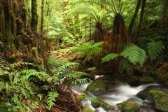 forntida rainforest royaltyfri foto