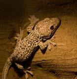 forntida reptil Arkivfoton