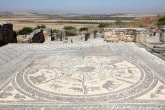 Forntida romersk mosaik i Volubilis Royaltyfri Foto