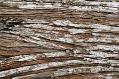 forntida sörja textur Royaltyfria Bilder