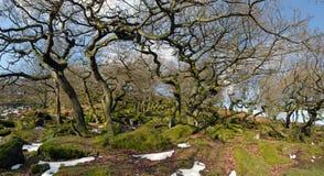 Forntida skogsmark för Padley klyfta Royaltyfri Foto