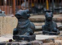 Forntida skulptur av den indiska kon, Brihadishvara tempel, Tanjavur Fotografering för Bildbyråer