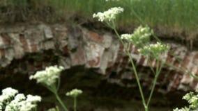Forntida tegelstenbro som är bevuxen med gräs stock video