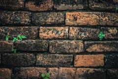 Forntida tegelstenvägg med små växter Fotografering för Bildbyråer