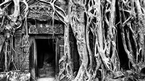 Forntida tempel för Ta Phrom Royaltyfri Bild