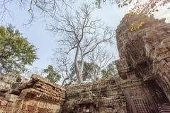 Forntida tempel för Ta Prohm, Angkor Thom, Siem Reap, Cambodja Arkivfoton
