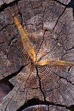 Forntida träbakgrund för ladugårdjournalsnitt Arkivfoto