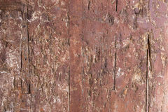 Forntida trädörrtextur Arkivbild