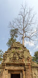 Forntida tree Tempel för Ta Prohm, Angkor Thom, Siem Reap, Cambodja Arkivbild