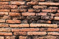 forntida vägg Arkivbilder