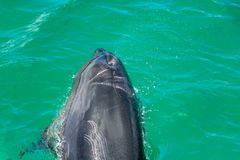 Foro del colpo delle radure del delfino in acqua verde immagini stock libere da diritti