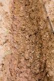 foro del suolo Fotografia Stock Libera da Diritti