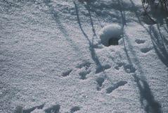 Foro del topo nell'inverno con neve con le tracce davanti all'entrata fotografie stock libere da diritti