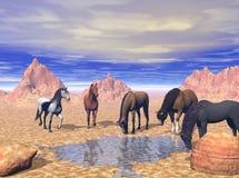 Foro di innaffiatura del deserto Fotografia Stock