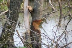 Foro nell'albero Fotografia Stock