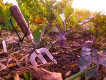 Forquilha de jardinagem com um punho de madeira Imagens de Stock Royalty Free