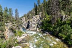 Forquilha média de Salmon River perto de Dagger Falls em Sawtooths fotografia de stock royalty free