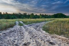 Forquilha na floresta Foto de Stock Royalty Free