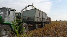 Forraje, cosechando el maíz para el ensilaje almacen de video