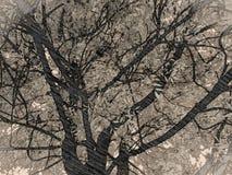 Forre a árvore Fotos de Stock