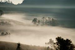 Forrest和雾在城镇dao, Chiangmai,泰国 库存照片