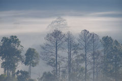 Forrest和雾在城镇dao, Chiangmai,泰国 免版税库存照片