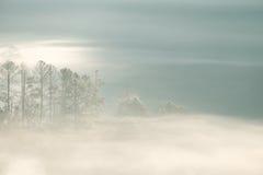 Forrest和雾在城镇dao, Chiangmai,泰国 库存图片