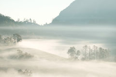 Forrest和雾在城镇dao, Chiangmai,泰国 免版税图库摄影