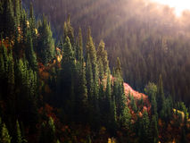 Forrest在与薄雾和阳光的秋天 免版税库存照片