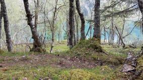 Forrest在挪威 库存照片