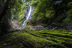 Forrest瀑布 库存图片
