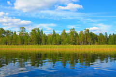 forrest的一个湖 库存照片