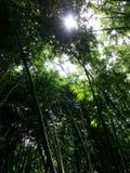forrest的竹子 图库摄影