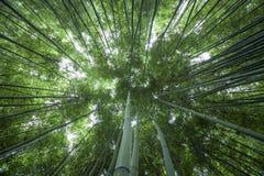 forrest的竹子 免版税图库摄影