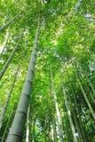 forrest的竹子 免版税库存照片
