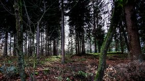 Forrest в осени, голубом солнечном небе, Veluwe Нидерланд стоковое фото rf