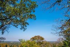 Forrest και ουρανός Στοκ εικόνα με δικαίωμα ελεύθερης χρήσης