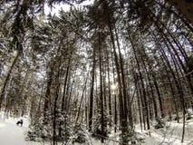 Forrest μάγισσας Στοκ Φωτογραφίες