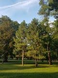 Forrest στο πάρκο Στοκ εικόνες με δικαίωμα ελεύθερης χρήσης
