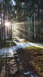 Forrest Германия Niarnia Стоковая Фотография