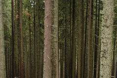 forrest гора Стоковое фото RF