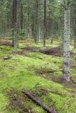 forrest зеленый мох Стоковые Изображения RF
