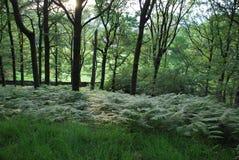 forrest зеленый цвет Стоковое Фото