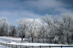 forrest зима ранчо Стоковое Изображение RF